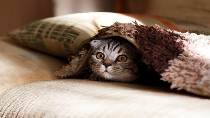 Путь воина в одной кошачьей судьбе