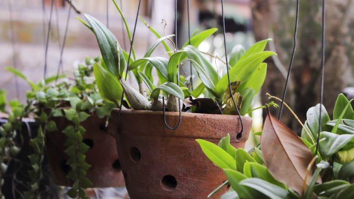10 полезных удобрений для  растений
