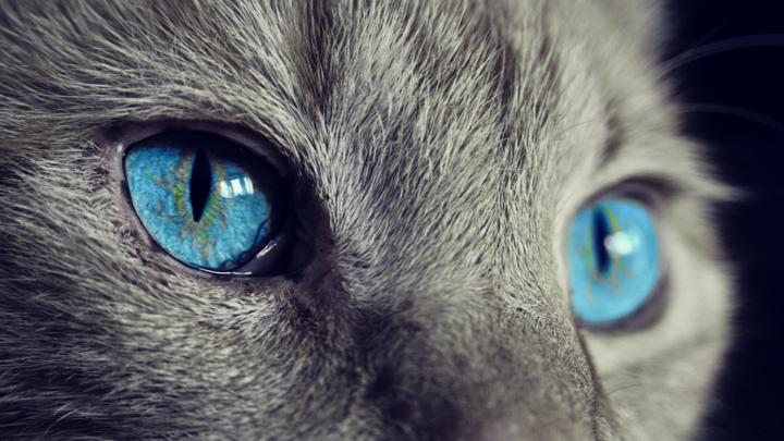 О том, как кошки определяют наличие негатива в жилье