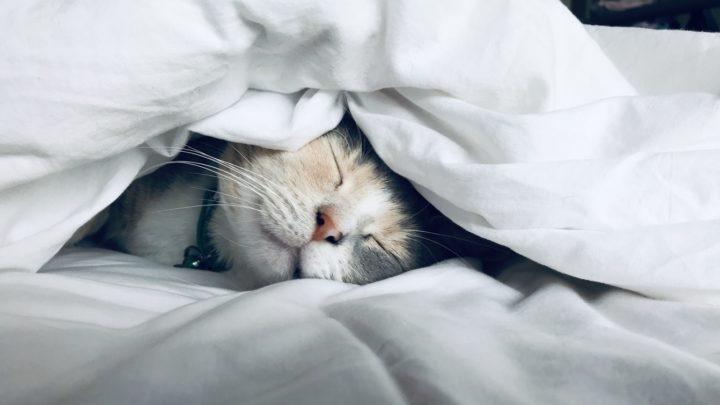 9 особенностей котов