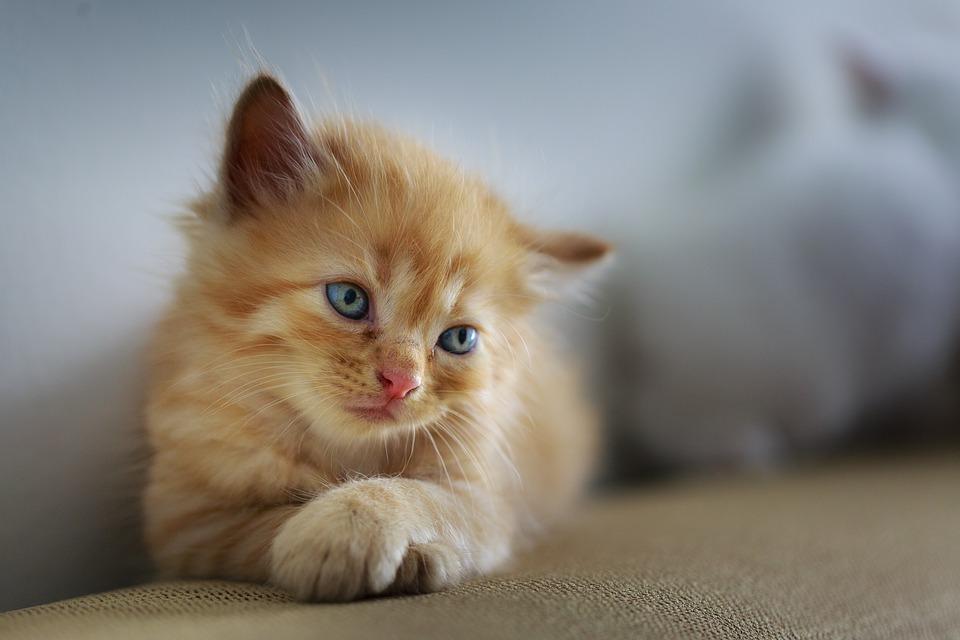 История одного выброшенного котенка