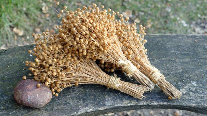 5 полезный свойств семян льна