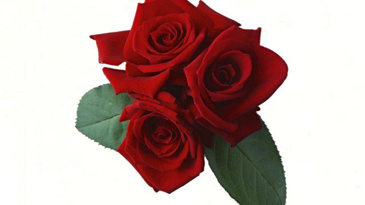 Тест: Женская натура по цветку! Просто выберите цветок!