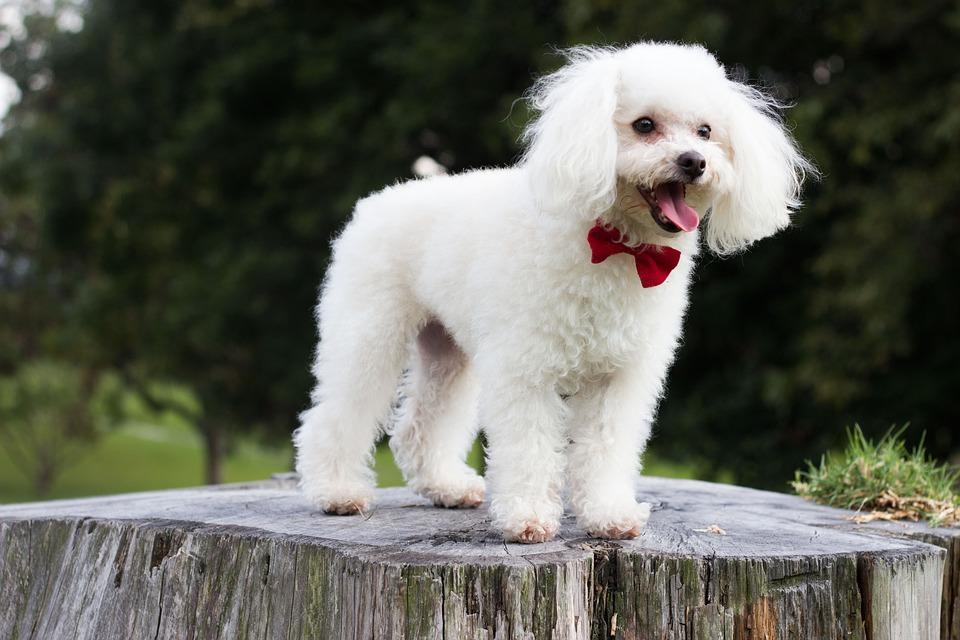 10 самых умных собак