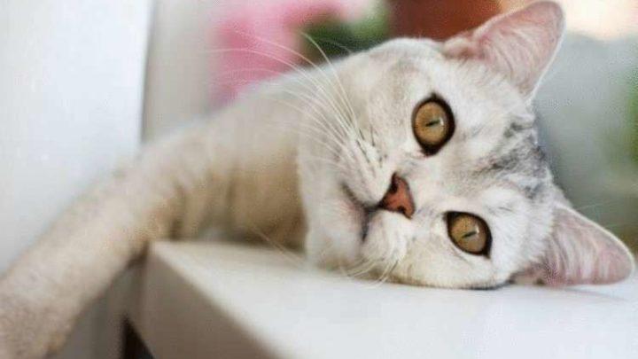 Причины, почему стоит завести кота и любить его