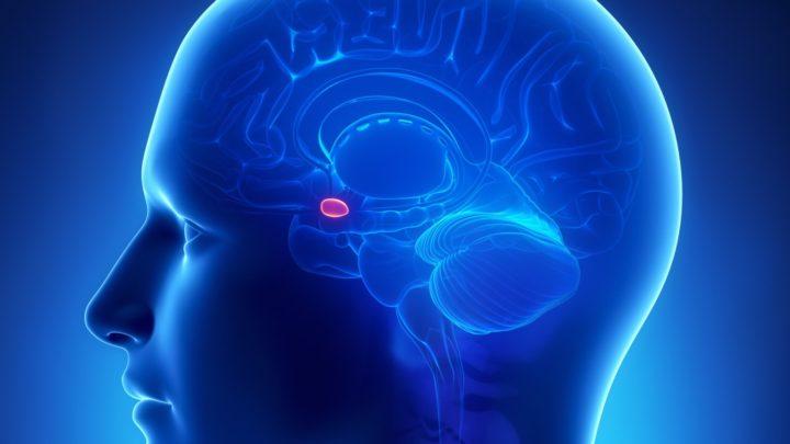 Мелатонин источник молодости человека.