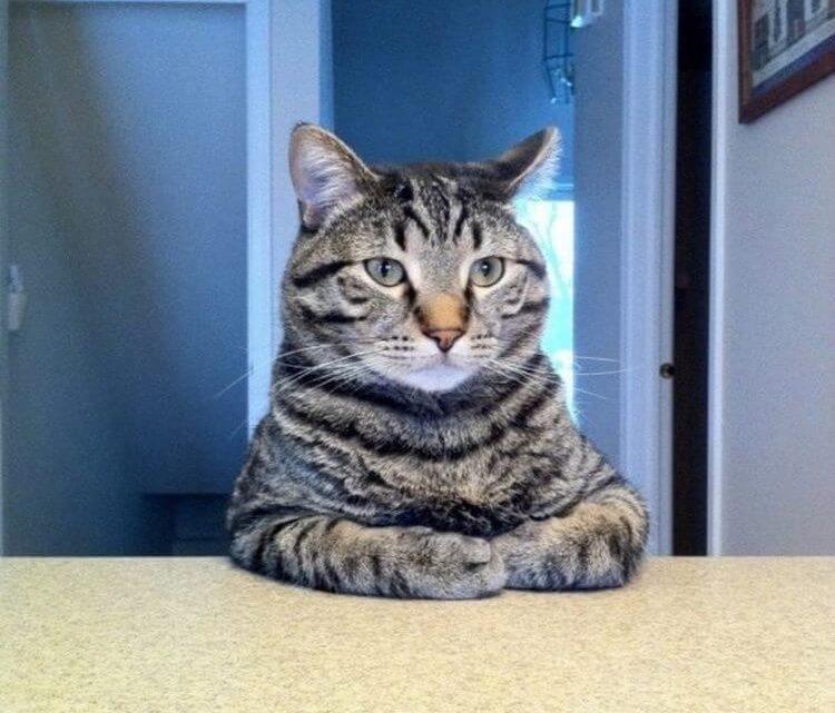 Интересные КОТОфакты и полезные советы для владельцев котиков