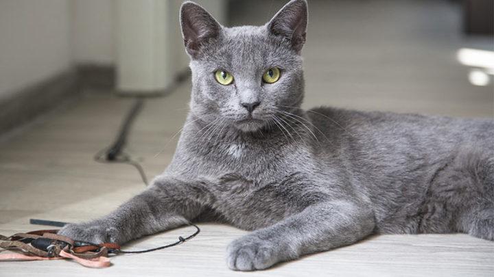Как масть кота влияет на судьбу своих хозяев