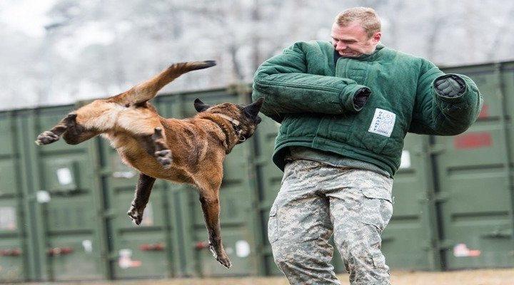 5 надежных способов, как защитится от собаки