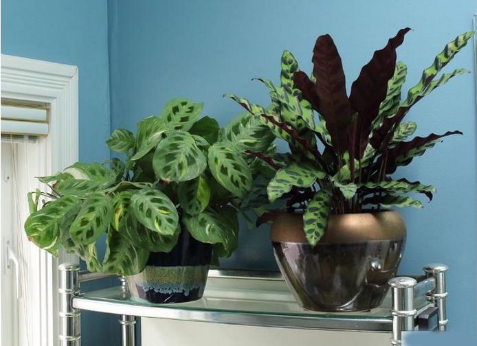 Топ-21 лайфхаков для ванной комнаты: с такими вещицами ванные процедуры станут гораздо приятнее.