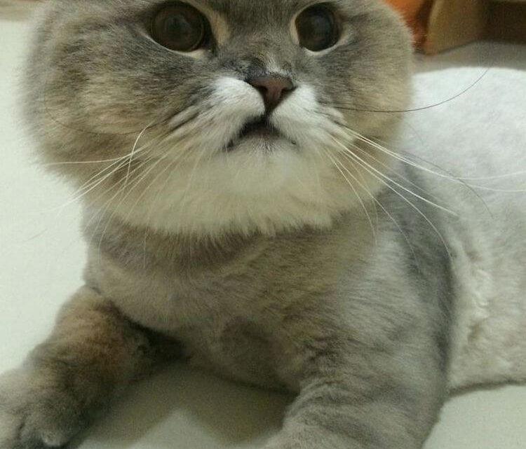 Знаменитый Тайландский кот по имени Bone Bone
