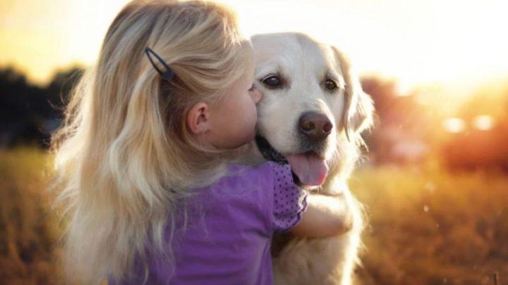 Можно ли целовать домашних любимцев